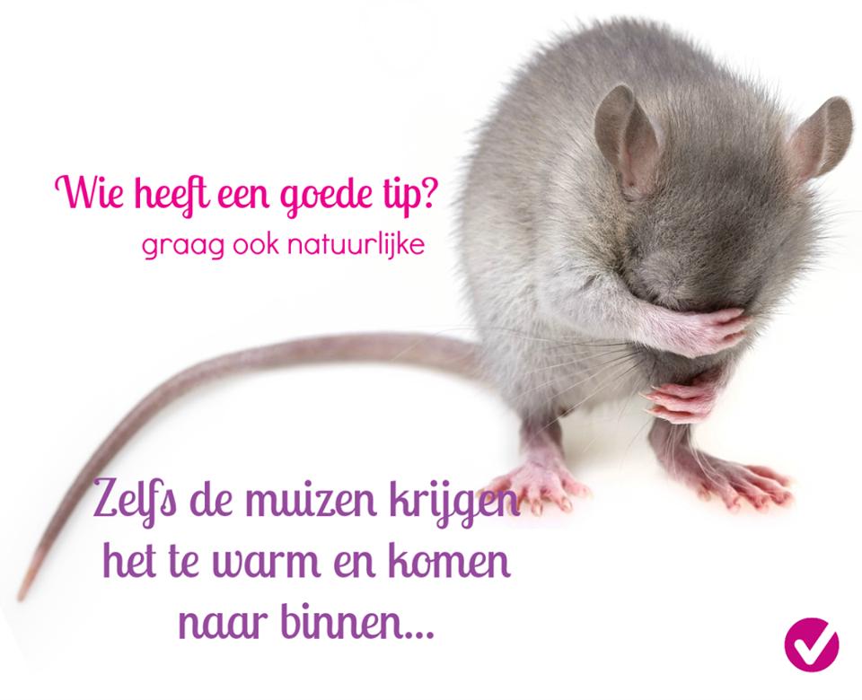 natuurlijke tips tegen muizen